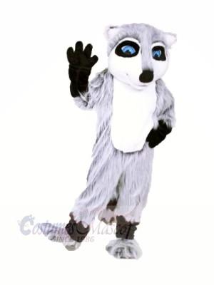 Qualité Raton laveur Mascotte Costume Dessin animé
